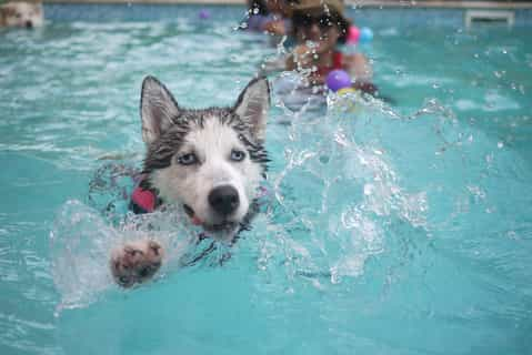 Picture of a dog splashing in a pool